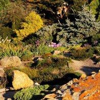 kiwaty, rośliny, kamienie, ogórd